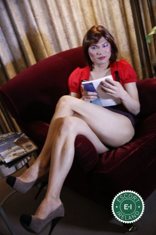 Meet the beautiful TV China Doll  in Dublin 1  with just one phone call